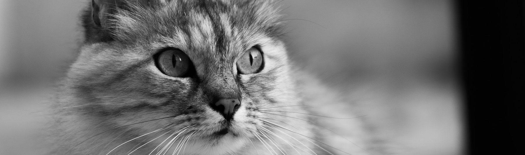 Bestattung von Katzen
