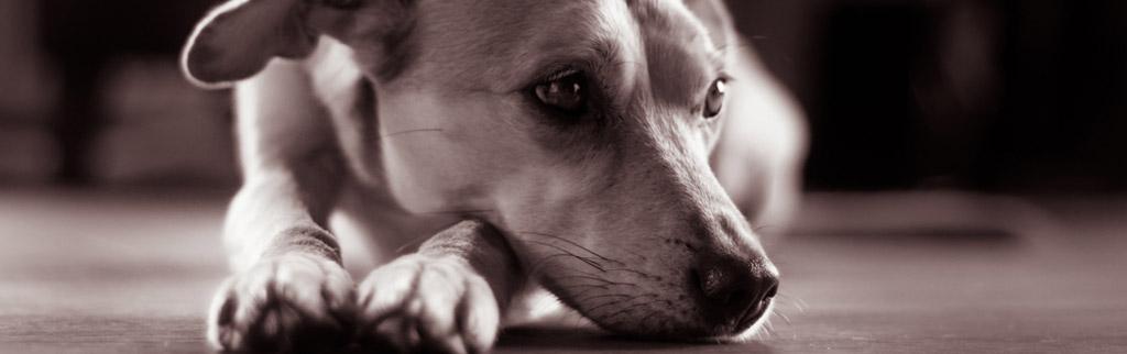 Einäscherung Hund